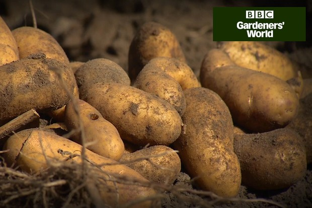 How to grow potatoes in a raised bed video