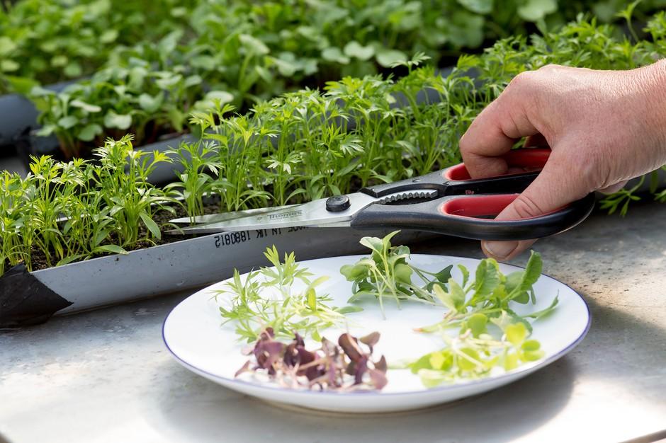 Mengenal Microgreens! Si Mungil yang Miliki Manfaat Untuk Kesehatan