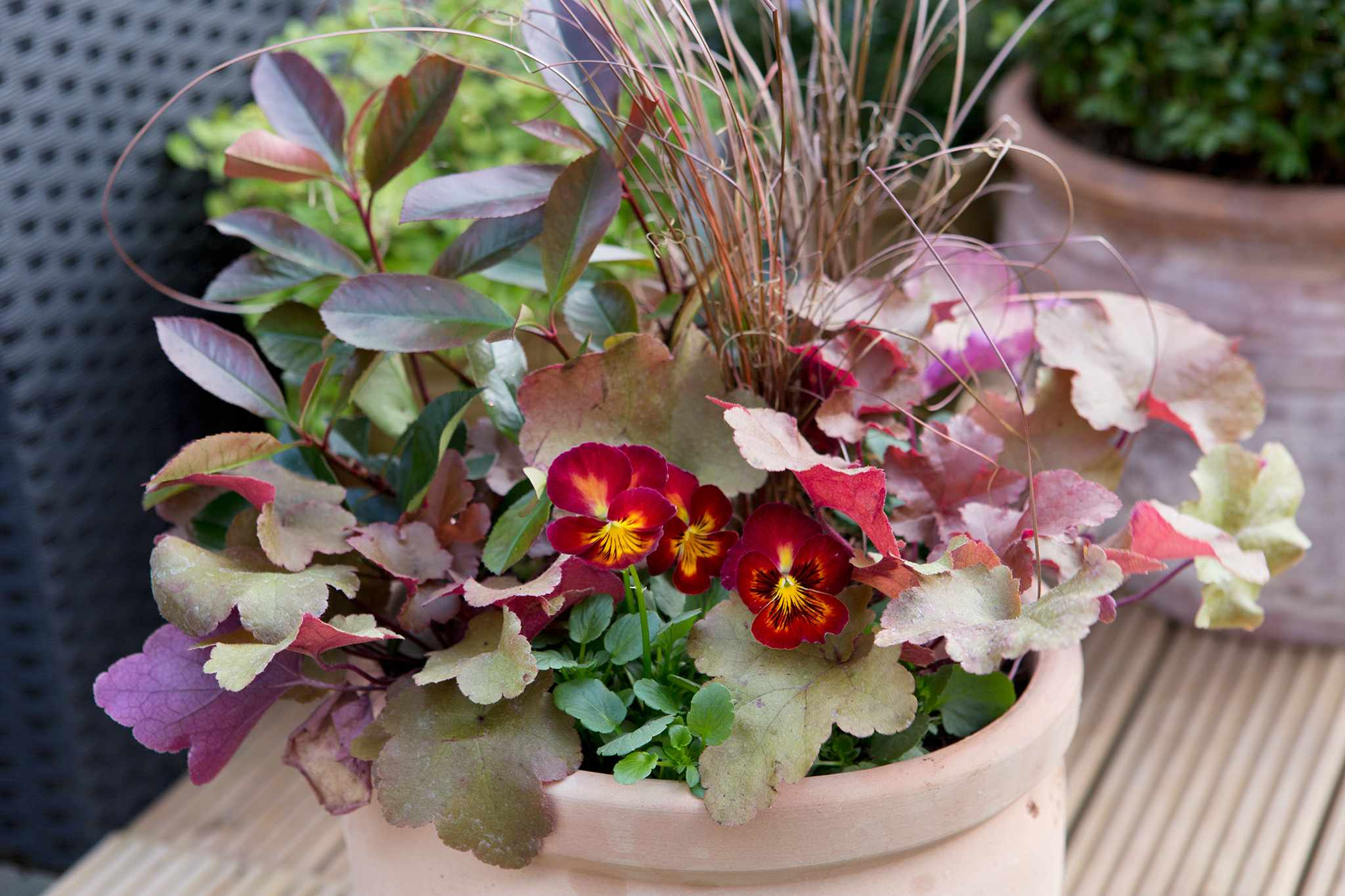 Heuchera, carex and pansy container