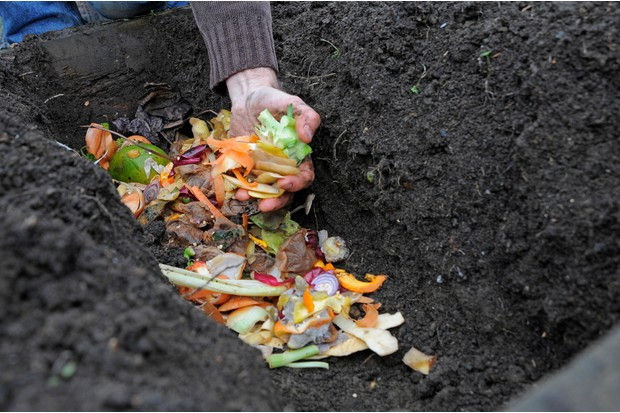 Adding vegetable waste to the trench