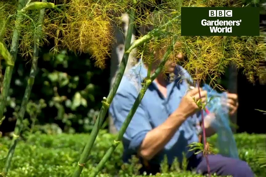 How to take semi-ripe cuttings of Mediterranean herbs video