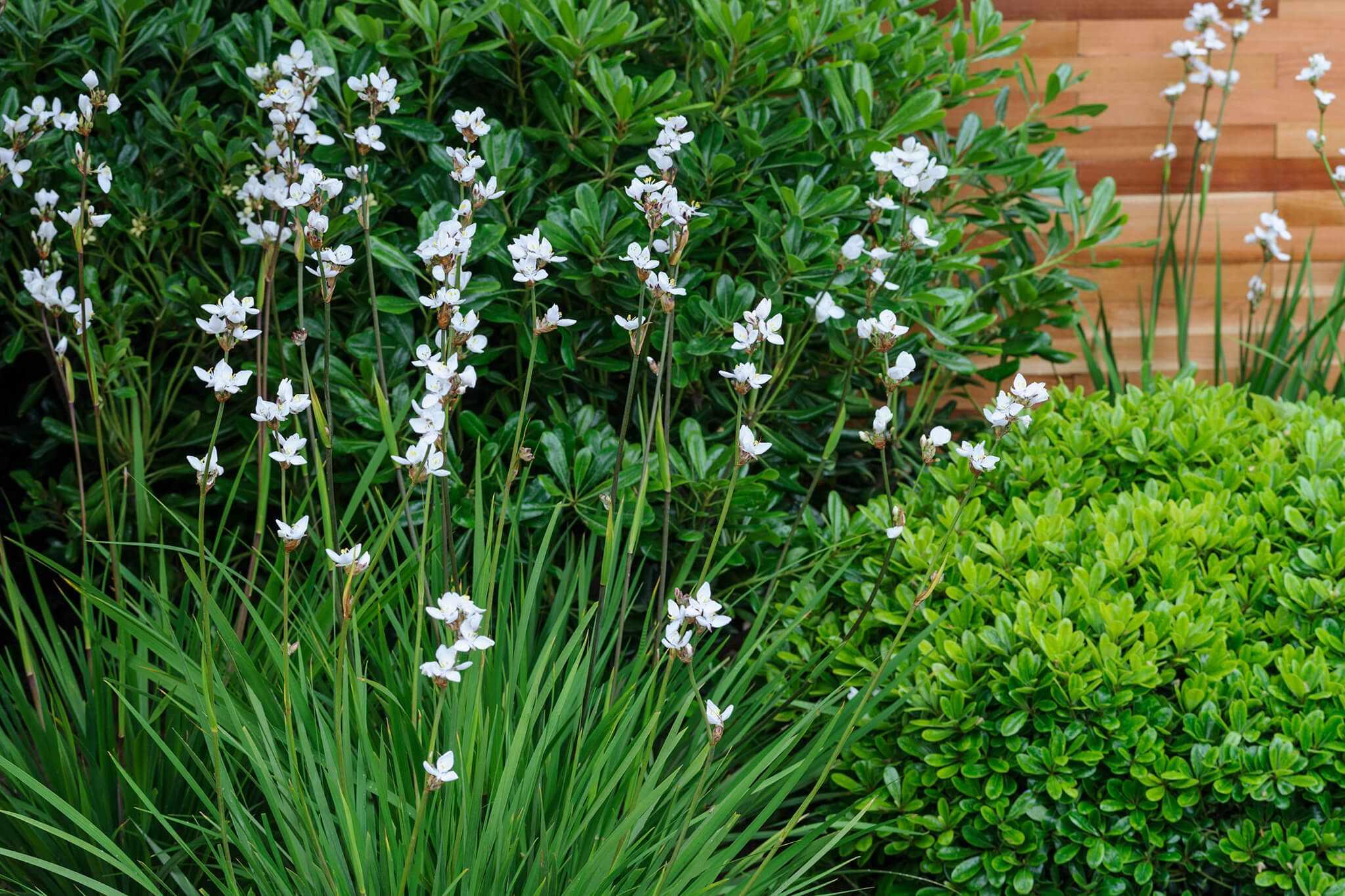 Best Plants for Narrow Borders