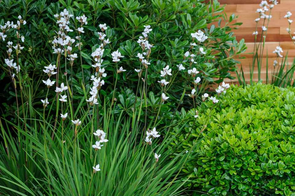 Best Plants For Narrow Borders Gardeners World Magazine