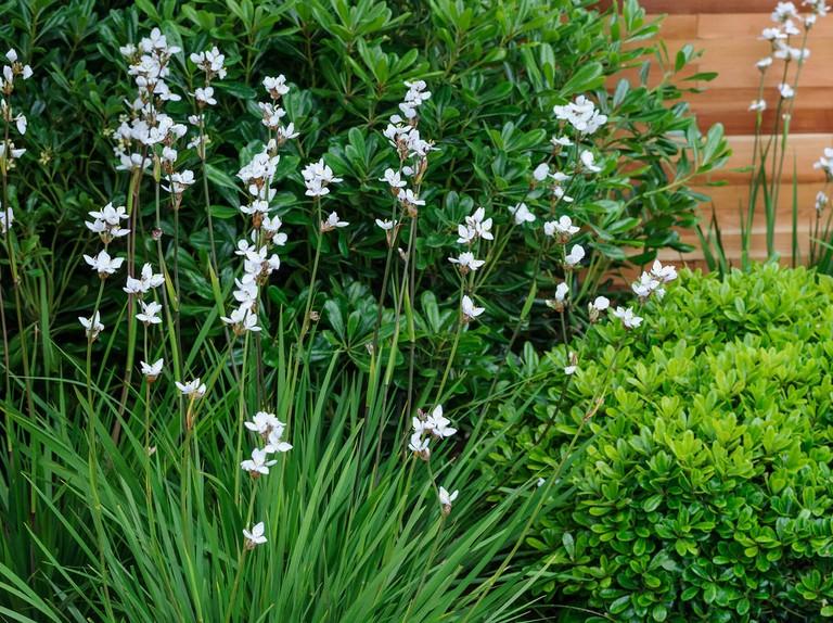 Best Plants For Narrow Borders Bbc Gardeners World Magazine