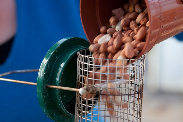 refilling-a-bird-feeder-6