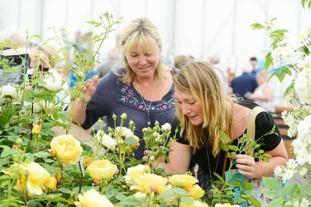 rose-festival-at-bbc-gardeners-world-live-2