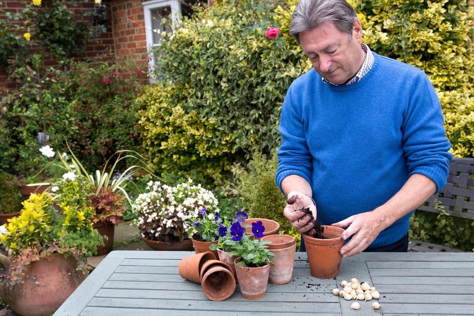 How to Plant Winter Iris Bulbs - BBC Gardeners' World Magazine