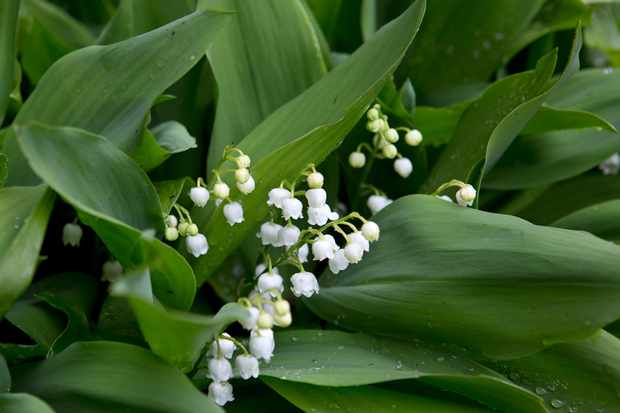 Five Bulbs for April Flowers