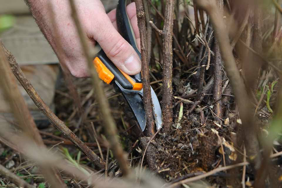 Tips for Better Pruning