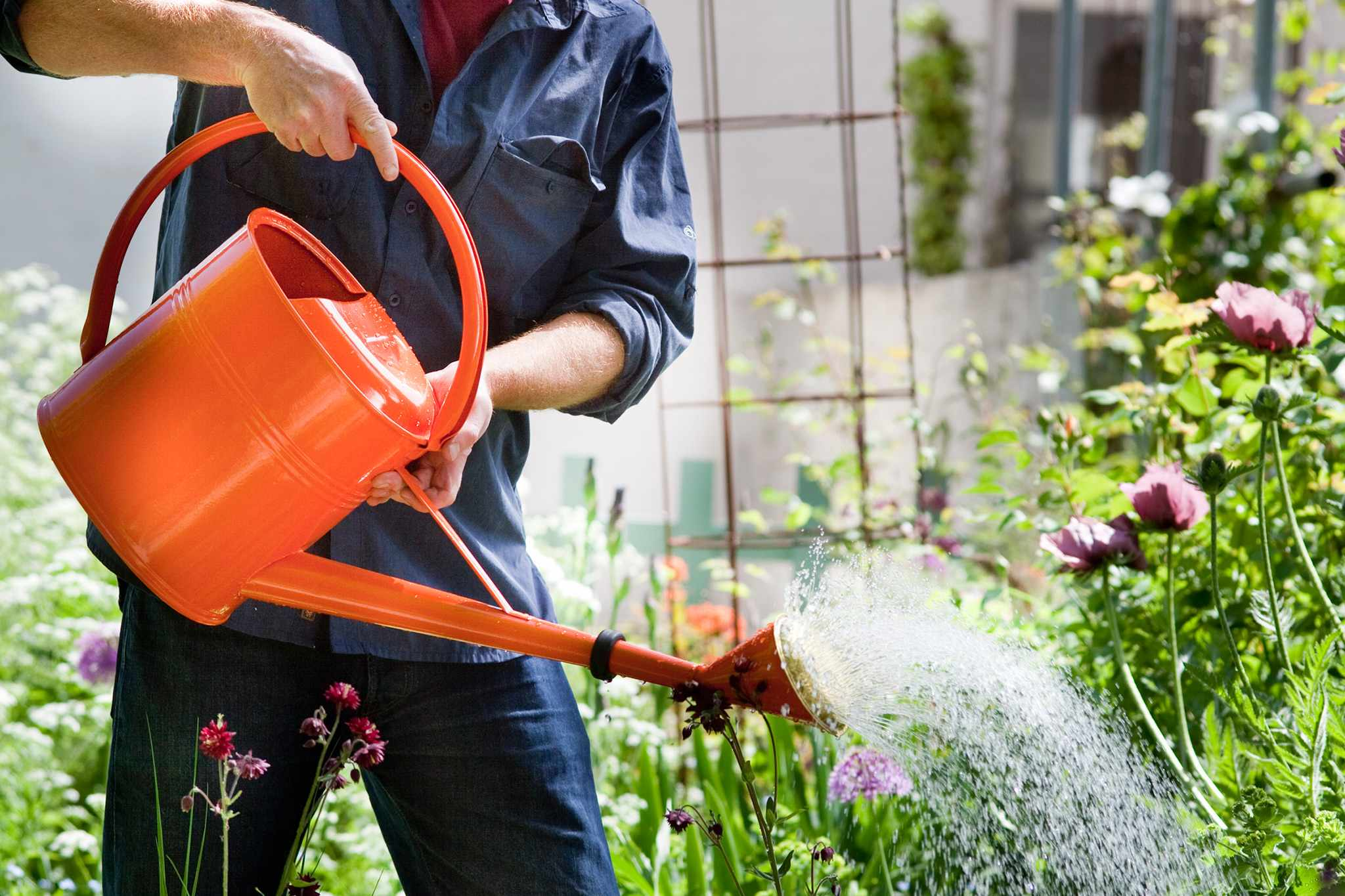Watering a border in summer