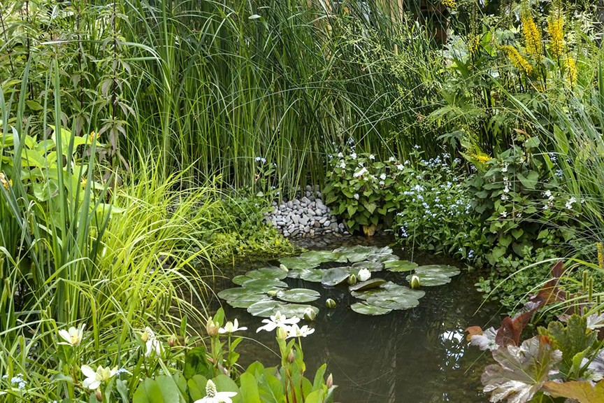 Is it OK to make a pond near trees?