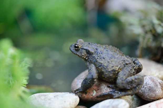 Build a Winter Toad Hide