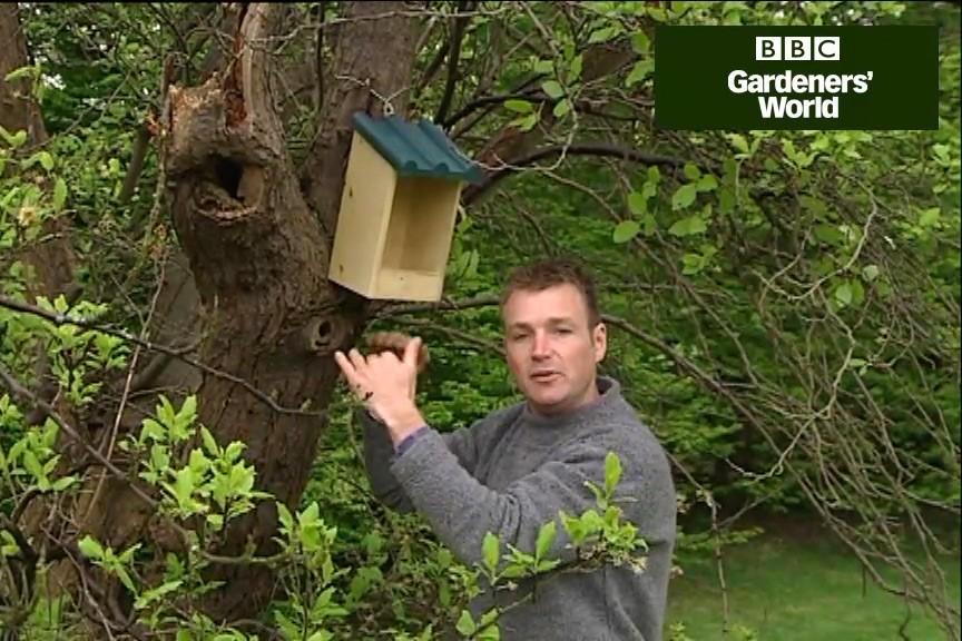 How to help garden birds in spring video