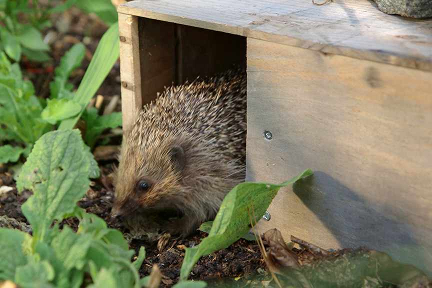 Making a hedgehog feeding station NFG video
