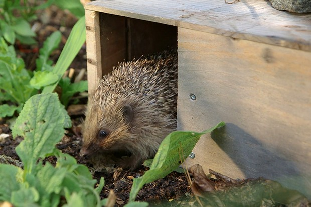 Making a hedgehog feeding station
