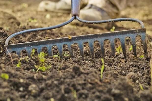 raking-the-surface-2