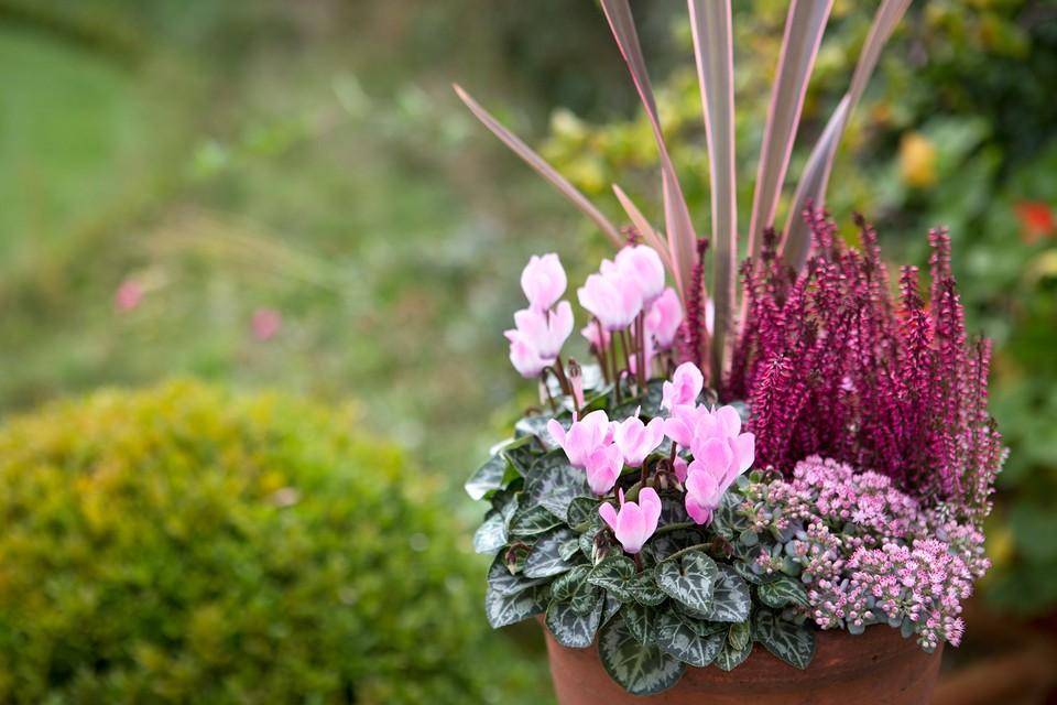 Autumn Pot Display Bbc Gardeners World Magazine