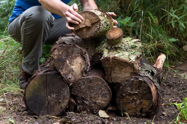 Creating a log pile dead wood wildlife habitat