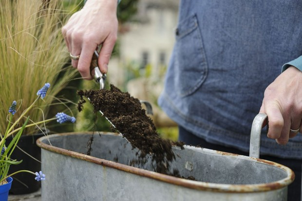Adding compost to the container