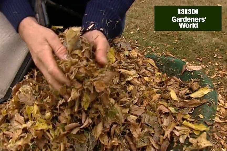 How to make leaf mould