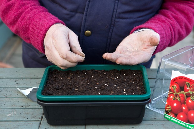 sowing-tomato-seeds-4