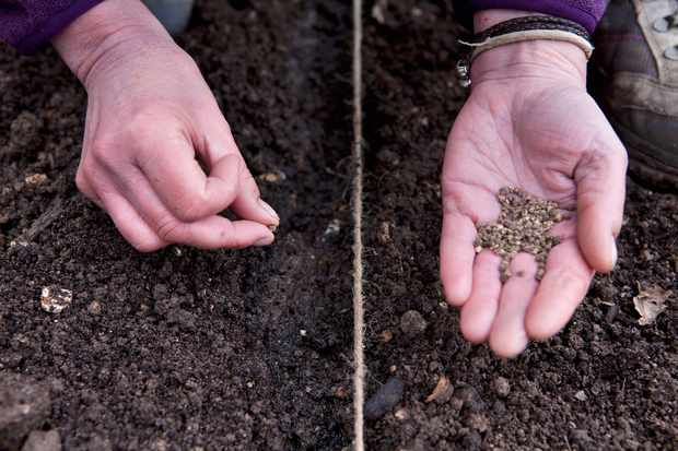 direct-sowing-2