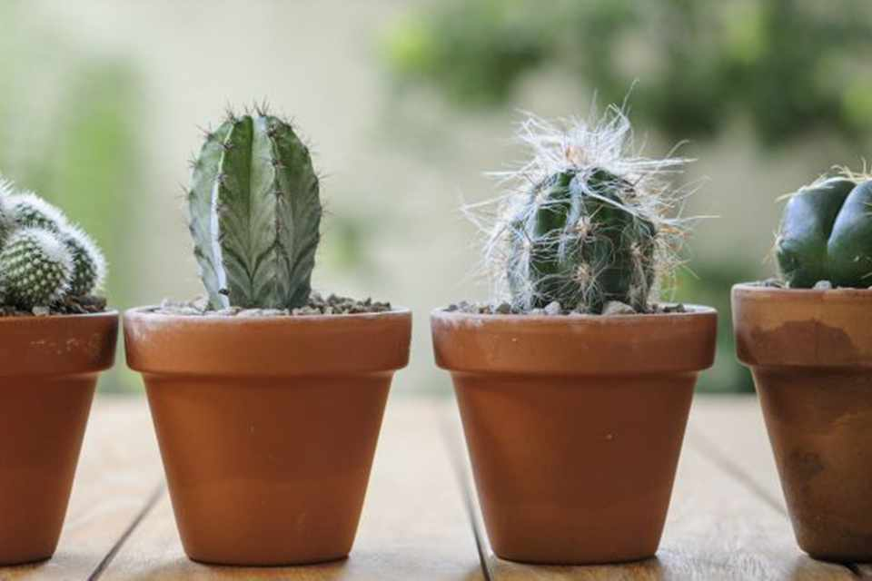 Grow Cacti From Seed In Pictures Gardenersworld