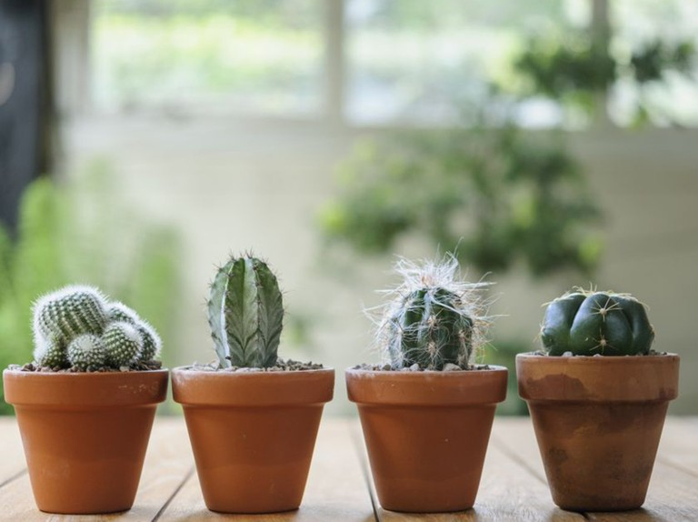 Grow Cacti From Seed In Pictures Bbc Gardeners World Magazine