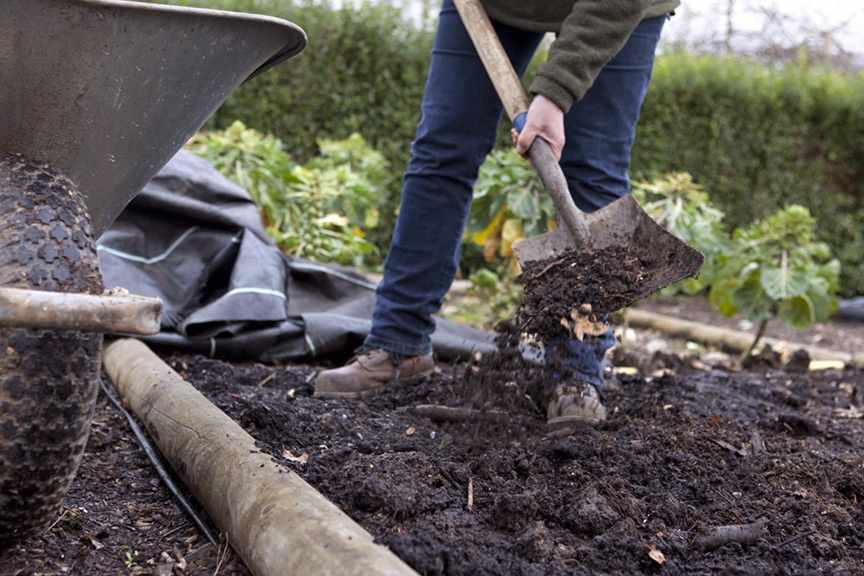 Should I add manure to the veg plot