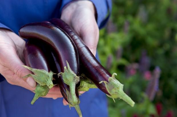 picked-aubergines-6