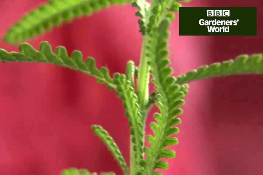 How to propagate plants to take to your new garden video