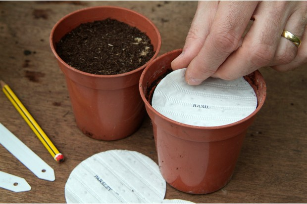 How to grow herbs from seed discs - placing the disc on compost