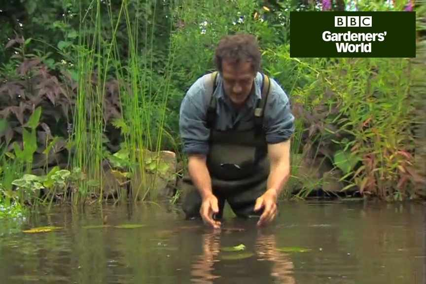 How to settle waterlilies into a garden pond video