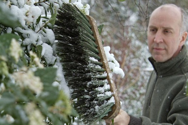 Protecting plants in winter - knocking snow off plants