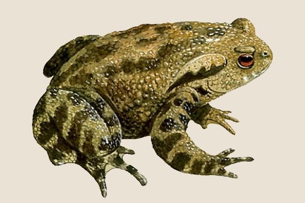 Amphibian And Reptile Identifier Gardenersworld Com