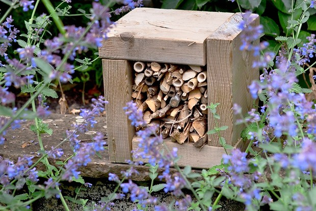 Do bee hotels actually work?