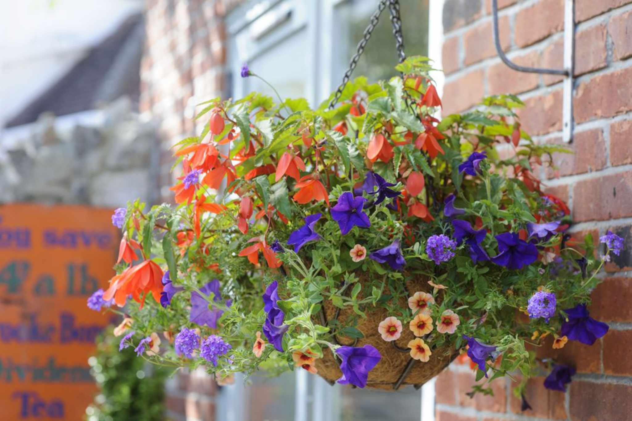 Begonia, Petunia and Calibrachoa Hanging Basket