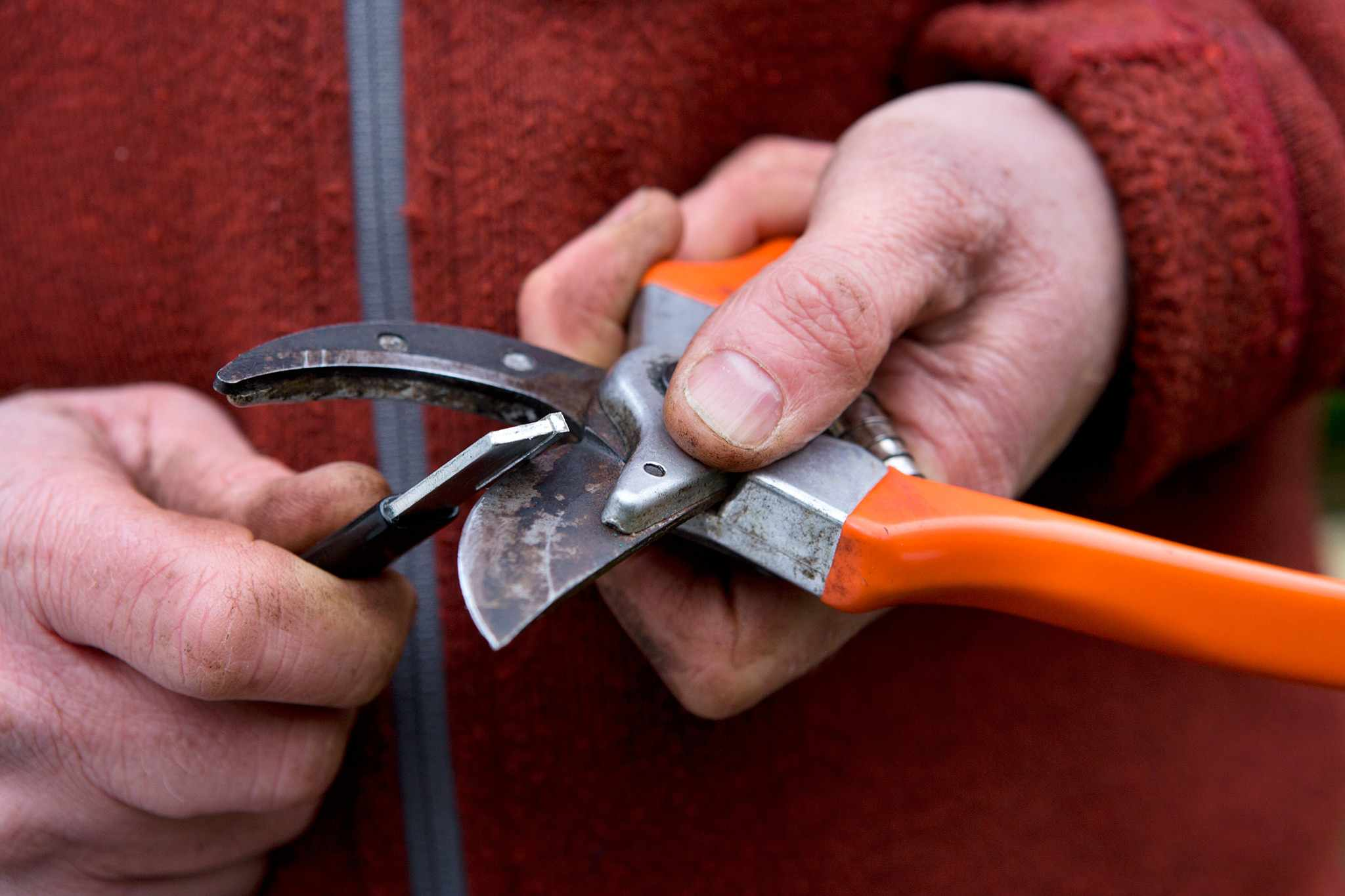 Maintaining secateurs