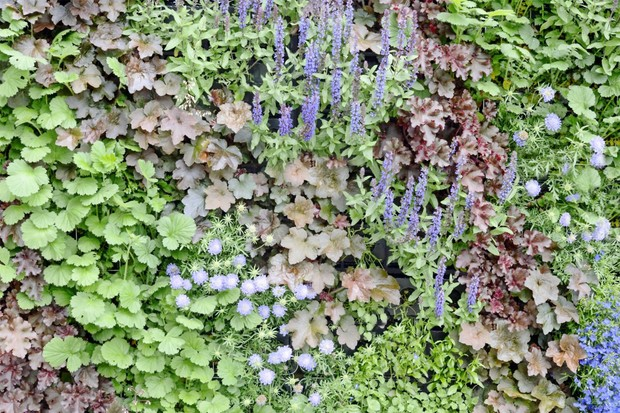 A living wall planted with green and bronze foliage and purple/blue flowers