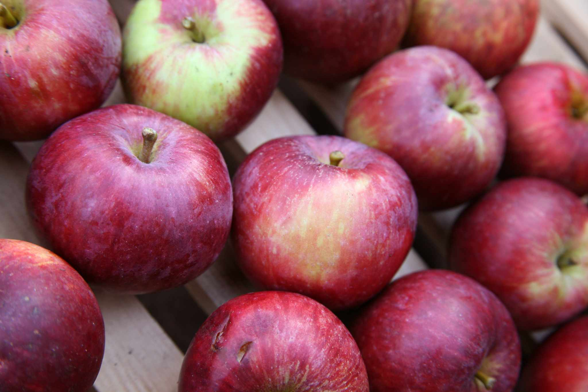 Stored apples