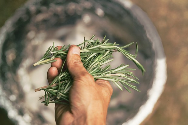 A handful of rosemary sprigs
