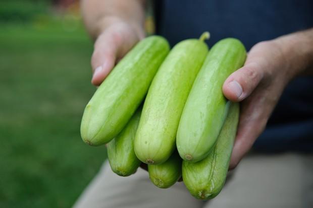 Straight cucumbers