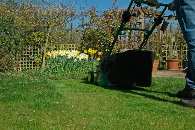 Mowing a lawn in spring