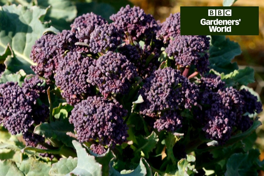 How to plant colourful veg video