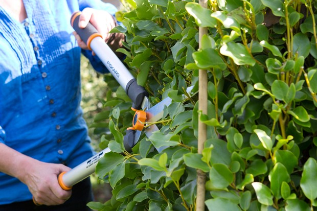 Clipping the ends of the hedge