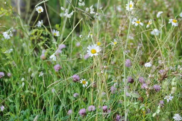 How to lay wildflower turf