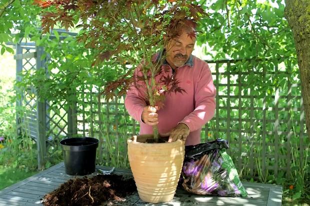 Root pruning