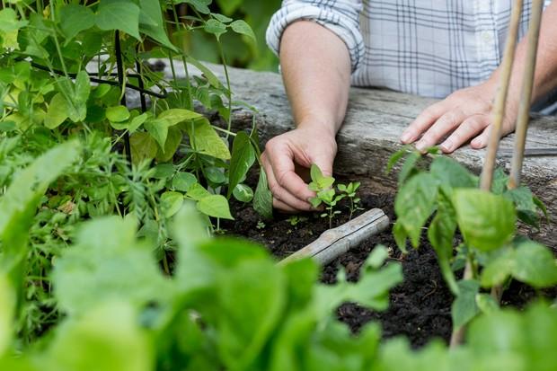 removing-weed-seedlings