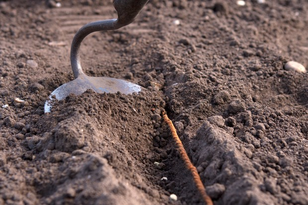 using-a-draw-hoe-to-cover-seeds-in-a-drill-3