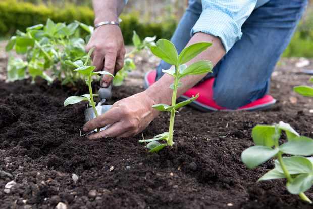 gardening job checklists april